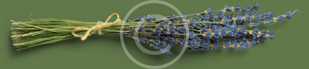blue_flowers.png